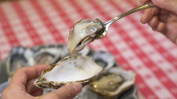 海の幸をほおばる。クリーミーなフレッシュ牡蠣を食べ比べ