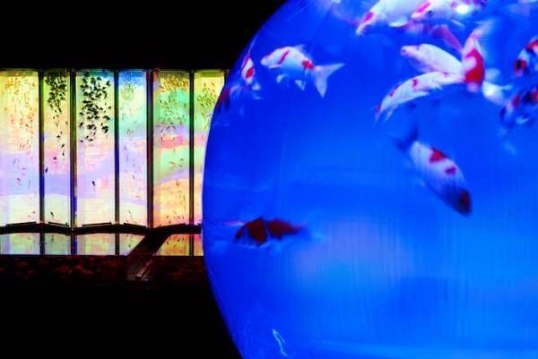 今年も金魚が舞泳ぐ「アートアクアリウム2018」開催