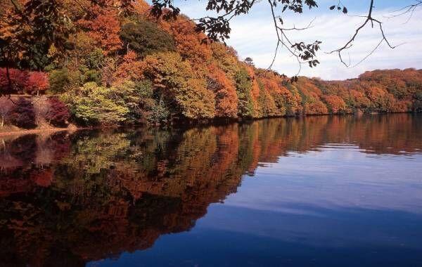 静岡県・伊東市の秋の魅力をお届け。紅葉など秋を満喫できるスポットが盛りだくさん