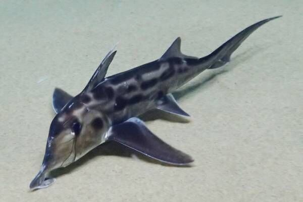 【サンシャイン水族館】小さい姿は今だけ!かわいい赤ちゃん多数登場