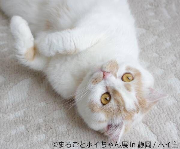 フォロワー29万人!人気猫ホイちゃんの単独展開催!