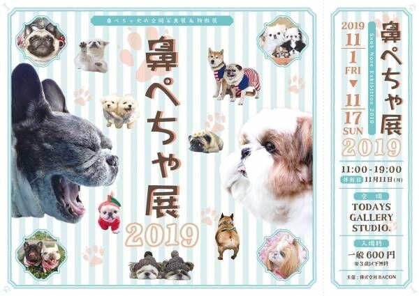 鼻ぺちゃ犬の合同写真展「鼻ぺちゃ展2019」開催!