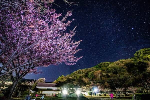早咲きの土肥桜で春の訪れを感じよう! 静岡県・ 伊豆市の早春を満喫