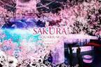 海と桜の幻想的なコラボ!品川「SAKURA AQUARIUM」