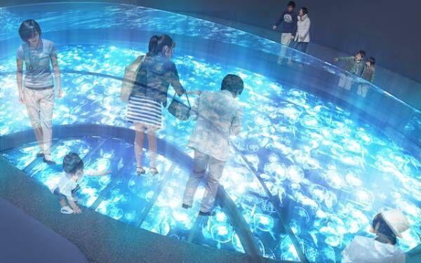 「すみだ水族館」のクラゲを観察できる新しい「クラゲエリア」が誕生