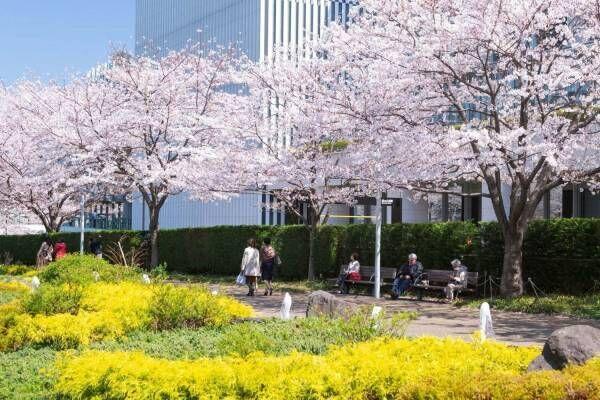 """東京ミッドタウンの「ミッドタウン・ブロッサム」夜桜ライトアップ&""""春色""""ロゼでお花見も"""