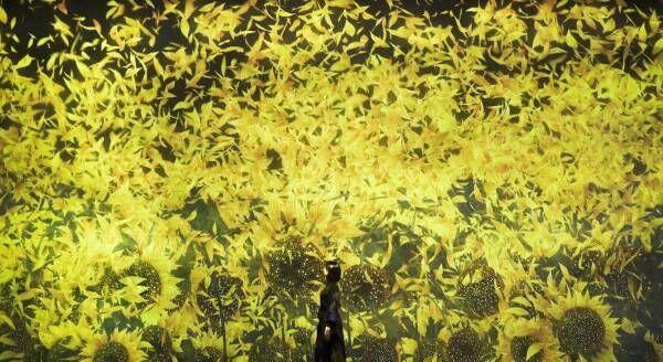 """チームラボ""""約10万本のひまわり""""が咲き誇る新作展示、お台場・チームラボボーダレスでスタート!"""