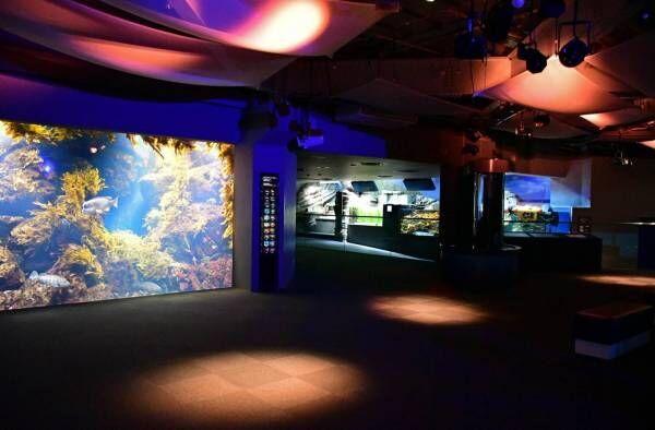 """「新江ノ島水族館」クラゲが主役の限定イベント、""""秋の海中散歩""""がテーマの展示も開催!"""