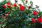 """ホテル椿山荘東京""""触れる雲海""""や約1万本の椿が庭園に、幻想的なライトアップを開催!"""