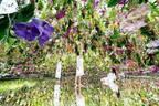 東京・豊洲「チームラボプラネッツ TOKYO DMM」13,000株のランの花に埋め尽くされる新エリアオープン!
