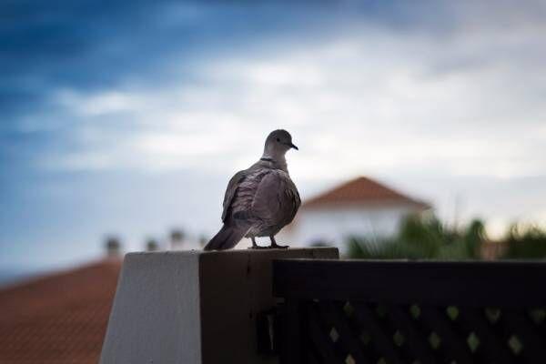 鳥よけグッズと掃除で効果あり!?ベランダを汚す鳥の対策を知ろう【鳥対策・後編】
