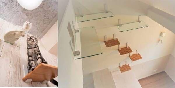 猫の肉球が見放題♪ 石膏ボード壁にも取付可能、耐荷重15㎏の安心設計キャットステップ「ニャンともウォーク」