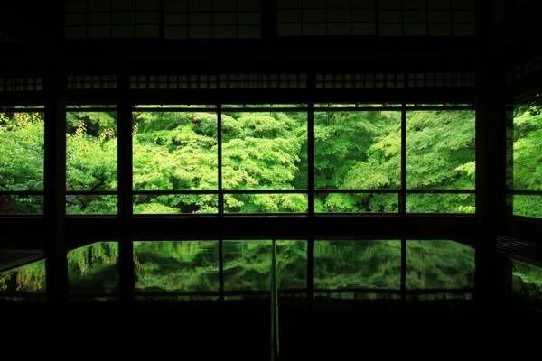 【限定プラン】特別公開の京都・瑠璃光院でロマンティックな青もみじライトアップ