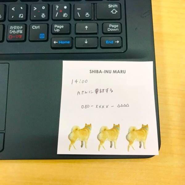 【キャンドゥ】SNSで大人気!柴犬まるのコラボグッズがかわいすぎる