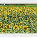 8月7日は「花の日」♡ひまわりやハイビスカスなど夏を彩るお花フォトまとめ
