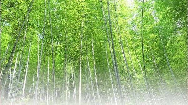 インテリアに竹を。創業124年を誇る〔竹虎〕の伝統的な竹製品の魅力に迫ります♪