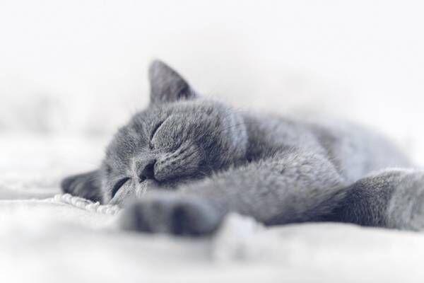 毎日のトイレで愛猫を健康チェック!ペットケアモニター《HN-PC001》が発売