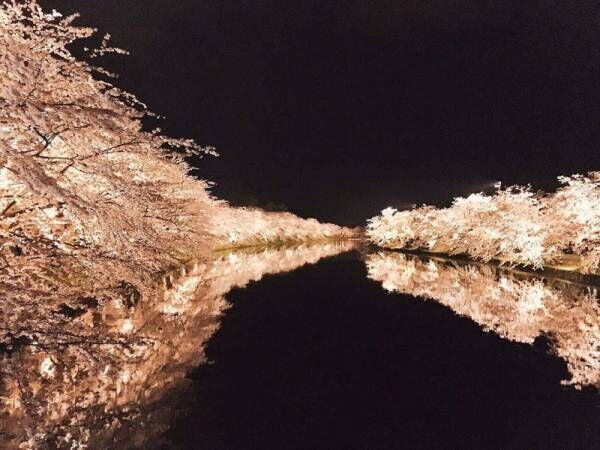 人生で一度は訪れたい!日本の「桜の名所」とおすすめお宿5選