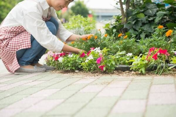 【楽天】ガーデニングで癒やされよう♪夏でも元気に咲く色鮮やかなお花7選!