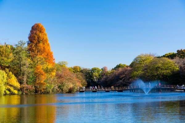 お天気の日は外で過ごしたい♪一度は行きたい関東のピクニックスポット!