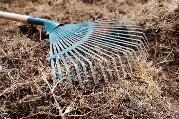 フサフサの芝生になった♡まくだけでOKのお手軽アイテムで緑鮮やかに♪