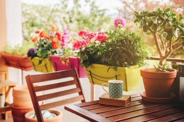 お花がキレイなまま長持ち♡切り花にも鉢花にもOKなマルチに活躍するアンプルが登場!