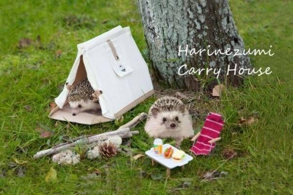 テント型の「ハリネズミキャリーハウス」をクラウドファンディングREADYFORにて先行販売開始