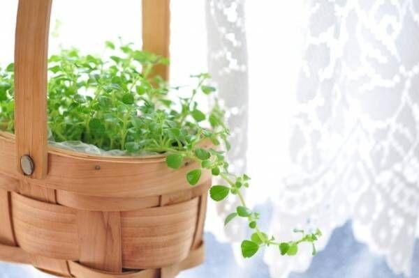 初心者OKの観葉植物4選!おしゃれな飾り方、購入時の注意点とは?