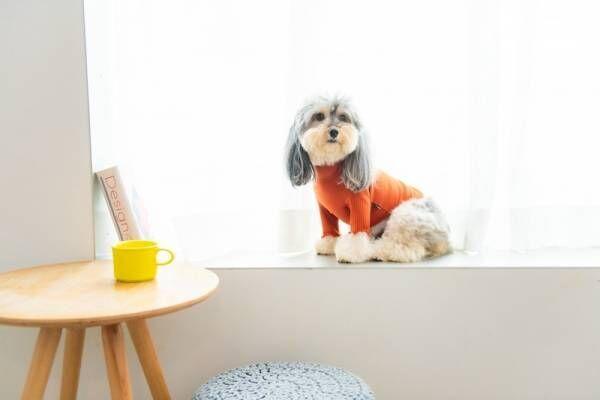 ~愛犬がいる暮らしをより幸せに~愛犬のライフスタイルショップ『Wonder Pad』オープン
