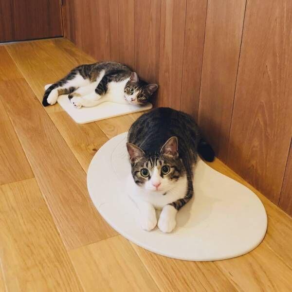 ゴロゴロがとまらない♡猫がよろこぶ猫専用の珪藻土って!?