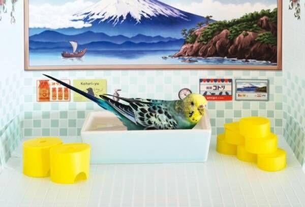 小鳥用の銭湯、「バードバス」ならぬ「バード銭湯」がフェリシモ「YOU+MORE!」から誕生