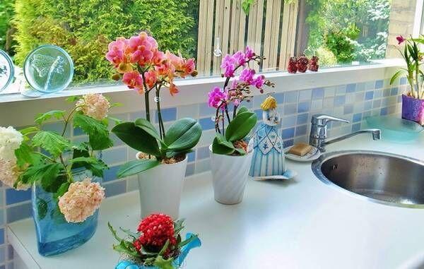 プレゼントや、ご自宅用にも!「幸せな花」をお部屋に♪おしゃれな胡蝶蘭をラインナップ