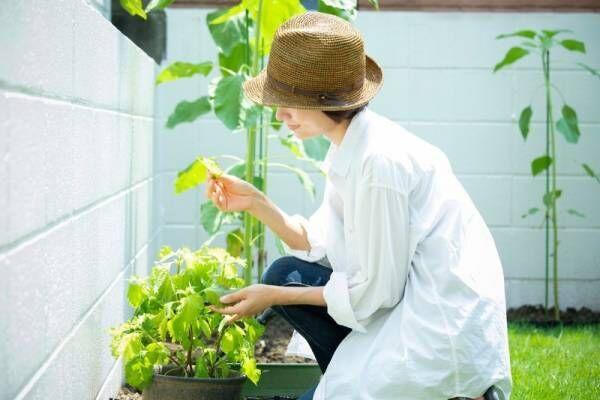 【初心者も◎】プランターで簡単!家庭菜園を成功させるコツ