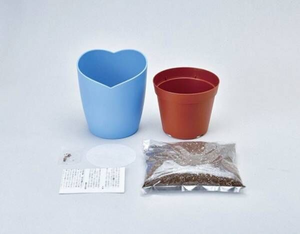 【空色の花】鮮やかな青がきれいなネモフィラの栽培キットがヴィレヴァンオンラインに登場