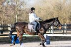 馬で道路を走りたい…現代でも可能ってホント?
