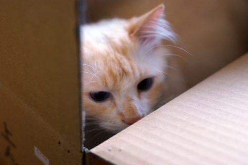 捨て猫を飼ってたら元の飼い主が現れた…所有者はどっち?