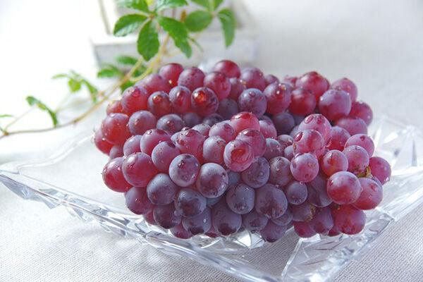 面倒くさがりもこれで解決! ブドウの簡単な食べ方
