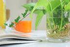 【おしゃかわ】水耕栽培で植物を育てる方法とは?