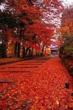 京都の紅葉を電車で巡る!御朱印ガール必見の秋旅観光プラン