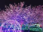伊豆ぐらんぱる公園で夜桜ライトアップ 花見×イルミの美しさにうっとり