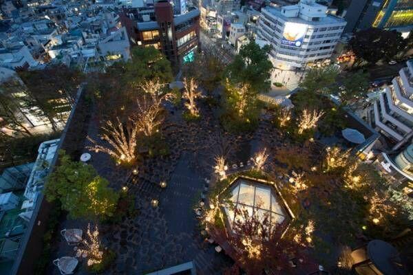 原宿「おもはらの森」でクリスマスイルミネーション、約16,000球の幻想的な光で彩る
