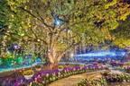 あしかがフラワーパーク「光の花の庭~Flower Fantasy2020~」500万球イルミ輝く光と花の世界