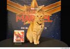 『キャプテン・マーベル』に登場!あの天才ネコのまさかのインタビュー映像到着!