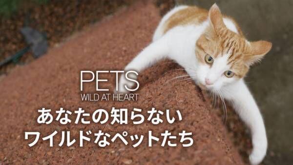 『あなたの知らないワイルドなペットたち』に見る、愛玩動物の知られざる一面とは?