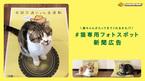 猫が誘われる仕掛けとは?猫の安全守る「全国交通にゃん全運動」キャンペーン動画が面白い!