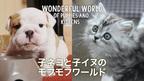 かわいさに悶絶! モフモフな子ネコと子イヌに癒やされる