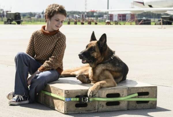 堂珍嘉邦の歌に乗せ、少年と戯れる犬『ハチとパルマの物語』特報&前売開始