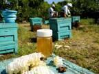 ミツバチと養蜂家と共に 循環型社会の実現へ  「未来の蜂蜜を守る」京都老舗蜂蜜屋のSDGs宣言