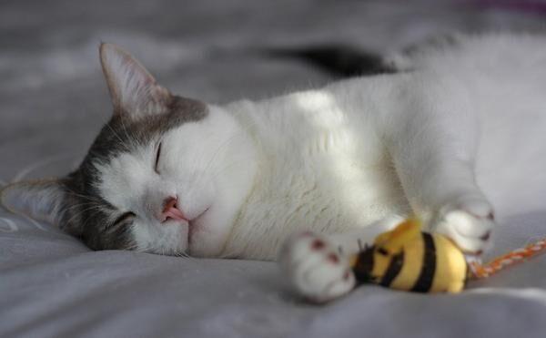 動物種ごとに健康に生きるために必要な睡眠時間は違う!