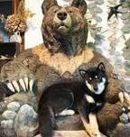 """""""大きなクマの彫刻と共に育った犬""""がSNSで反響、「成長して体がはみ出ても、そこが居場所に」"""